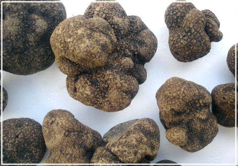 Трюфели – и грибы, и конфеты
