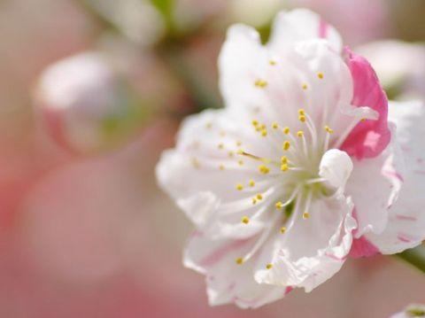 Первый день Весны, добавляем настроения!
