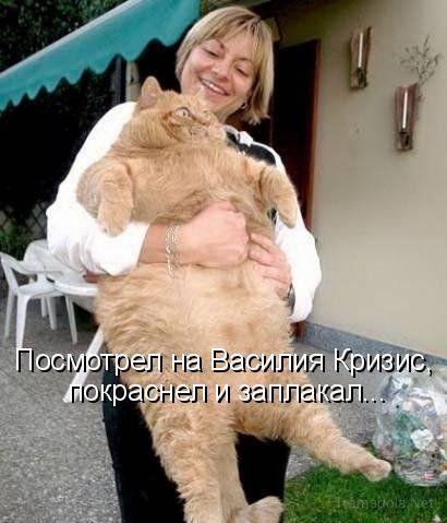 Вот это кот!!!