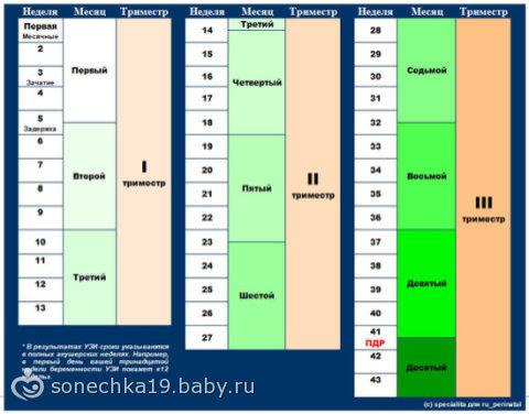 Соотношение месяцев и недель беременности