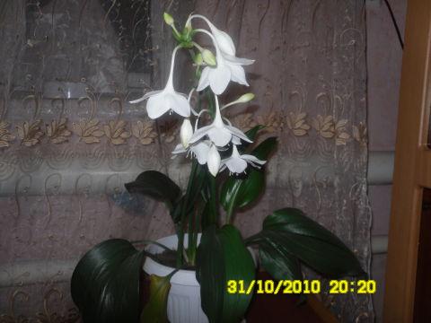 про цветок)