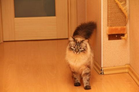 Просто так! показать своих котяр)))