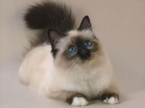 что будет делать кошка, если собаку облить валерьянкой?