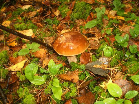грибы.фото