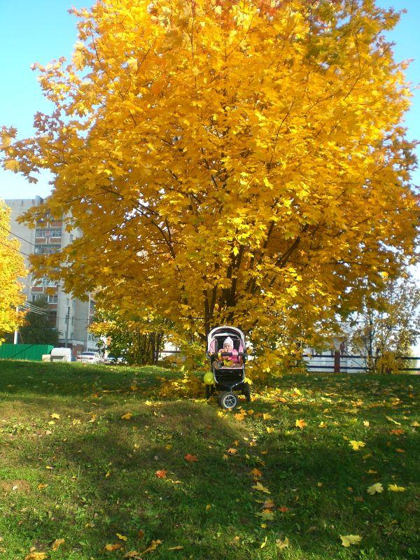 золотая осень.фото