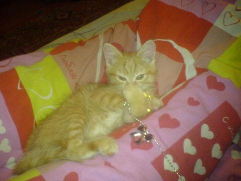 Мое рыжее солнышко))))