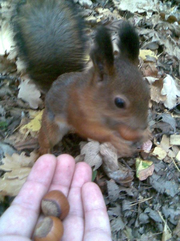 Смотрите какая прелесть у нас в лесу живёт)))