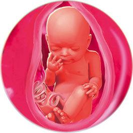 Беременность 29 недель форум мамочек