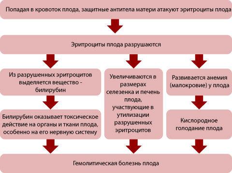 Уровень трансаминаз при гепатите