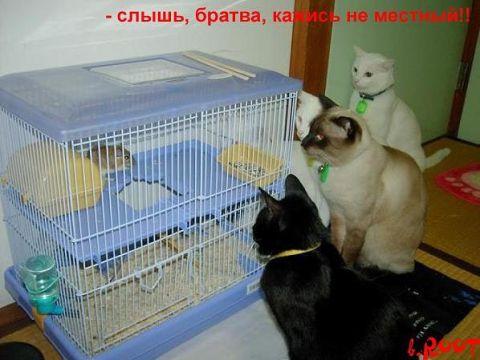 животные, смех и ужас(фото)