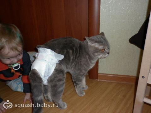 памперсы для котов фото