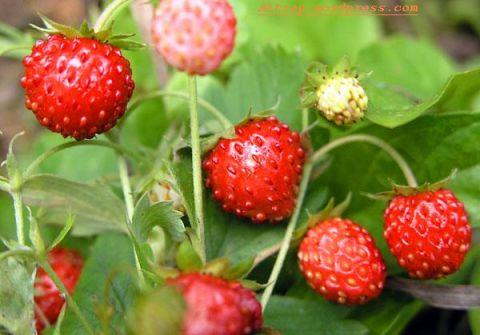 Можно ли давать ребенку компот из замороженных своих ягод??? или кисель???