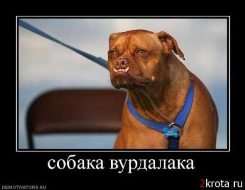 Собака-подозревака и др. Демотиваторы с собаками | 372x480