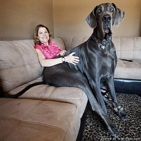 самый большой кролик в мире в фото