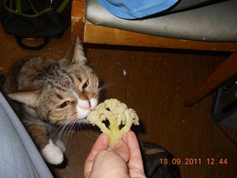 А что едят ваши кошки? ))))