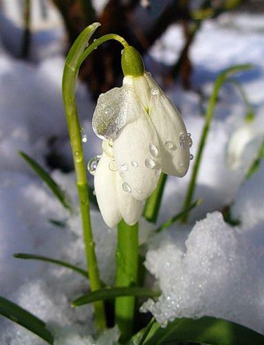 Дёвчёночки поздравляю вас с началом весны!